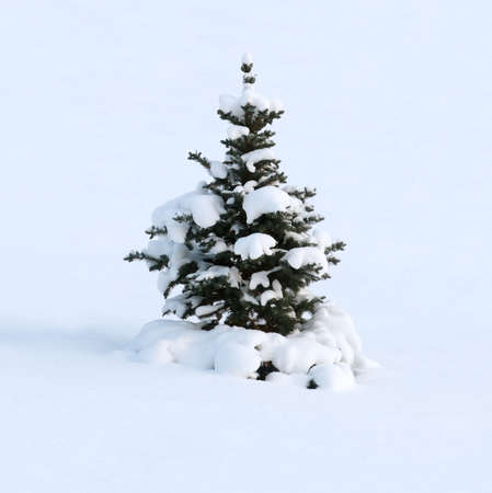 The young fur-tree as if has fallen asleep on a slope, covered by a snow cover photo