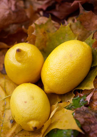 citric: Yellow autumn  citric still-life Stock Photo