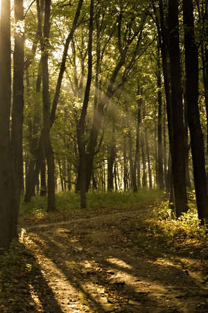 Mystical morning rays in the park photo