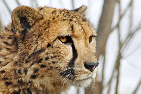 Attentive sight of the young wild animal photo