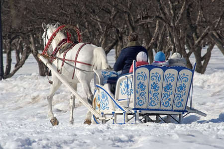 Winter holiday-walk in carriage with white horse in a winter sunny day photo