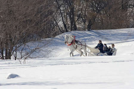 gaiety: Winter holiday-walk in carriage with white horse in a winter sunny day Stock Photo