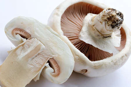especially: Mushrooms champignons-natural, which have grown in a wood without fertilizers and consequently especially tasty Stock Photo