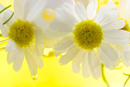 weariness: Foam for a bath with camomile-means for removal of stress and weariness Stock Photo