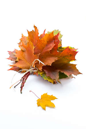 Autumn bouquet from leaves in a gift to the sentimental person photo
