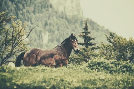 corse di cavalli: Cavallo nella foresta