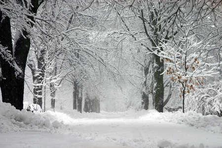 winter wonderland: Il Wonderland Di Inverno