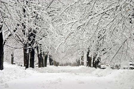winter wonderland: Inverno Wonderland