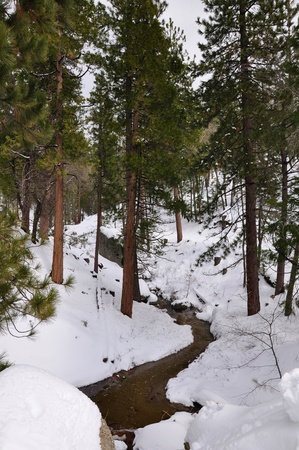 ponderosa pine winter: View of a small stream in the forest on Mt. San Jacinto.