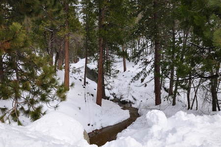 ponderosa pine winter: A small stream makes its way through the forest on Mt. San Jacinto. Stock Photo