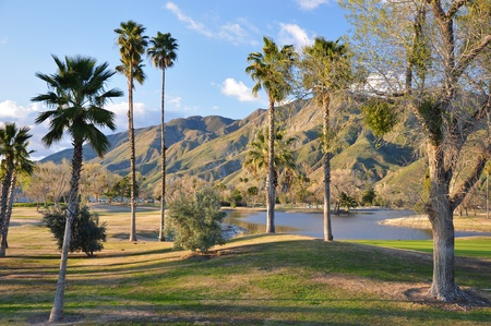 golf of california: Late afternoon view of sunlit hills and palm trees in San Jacinto, California. Stock Photo