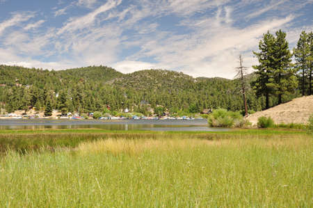 ponderosa: Reeds grow along the waters edge on the north side of Big Bear Lake.
