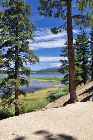 ponderosa: Big Bear Lake is seen through tall pine trees. Stock Photo