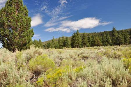 ponderosa: Wildflowers and scrub brush mix with pine forests in the San Gorgonio wilderness.