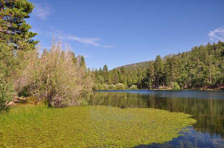 bernardino: View of scenic Jenks Lake in the San Bernardino mountains.