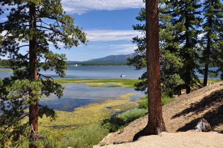 bear lake: Pine trees frame this view of Big Bear Lake in Southern California. Stock Photo