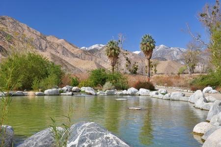 animales del desierto: Vista de un oasis en el desierto en Whitewater Canyon, cerca de Palm Springs, California.