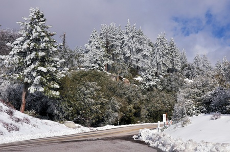 The trees of the forest are frosted with snow and ice on Mount San Jacinto in Southern California