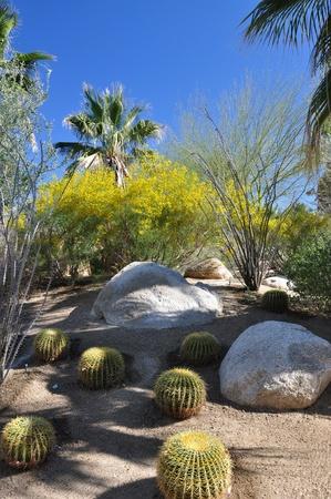 palm desert: Cactus mescola con fiori e palme in questa citt� giardino a Palm Desert, California