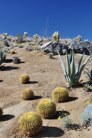 palm springs: Cactus grows up this hillside near Palm Springs, California