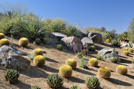 types of cactus: Different types of cactus grow on a hillside near Palm Springs, California