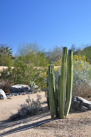 Cactus mixes with wildflowers in the desert near Palm Springs, California