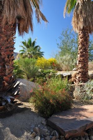 palm desert: Una variet� di arbusti del deserto e gli alberi crescono in un parco cittadino a Palm Desert, California Archivio Fotografico