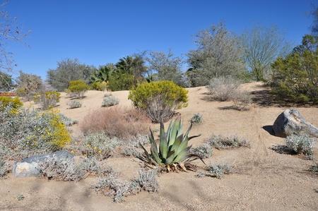 palm desert: Cactus e deserto arbusti crescono su una collina a Palm Desert, California