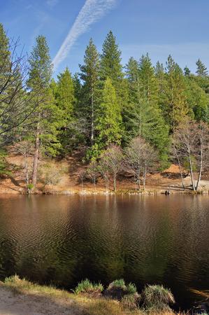 Pine and fir trees grow around Lake Fulmor on Mount San Jacinto in Southern California  Stock Photo