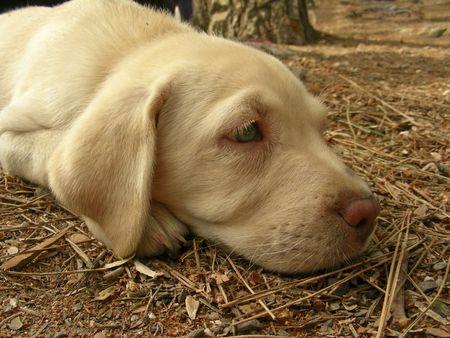 wistful:    Animal;        Wistful dog