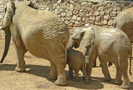 Elephant's  household ,  safari-zoo Ramat Gan, Israel Stock Photo - 422973