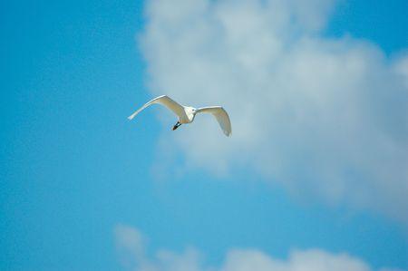 bird in sky, background Stock Photo - 3022421