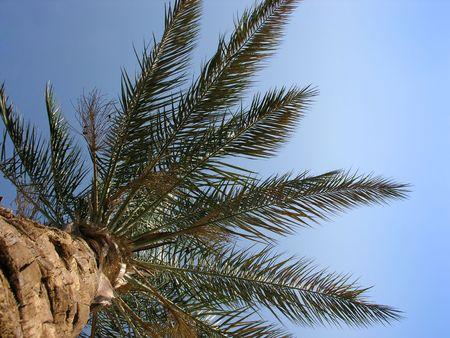 palm on sky Stock Photo - 423028