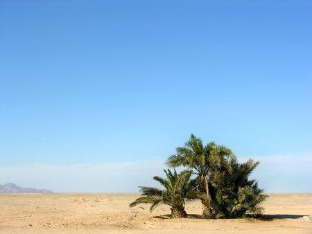 inhospitable: oasis in desert Stock Photo