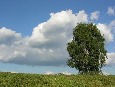 birch on meadow Stock Photo - 547887