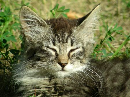 pubescent: whiskered kitty lies in grass on warm summer day