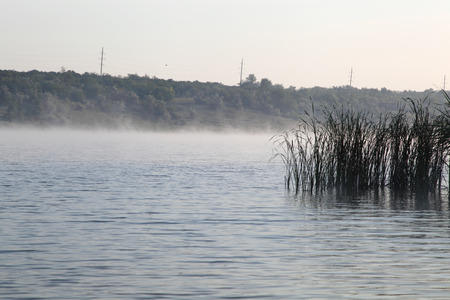 lake with reeds in the fog photo