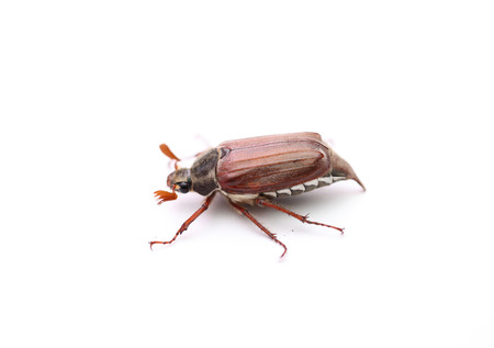 imago: On a photo chafer isolated on white