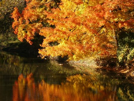 Glowing autumn foliage above a stream Stock Photo - 375558