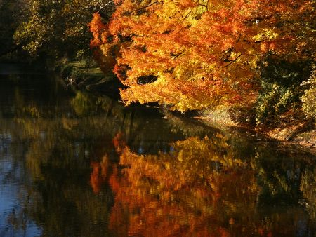 Autumn tree with reflection in water