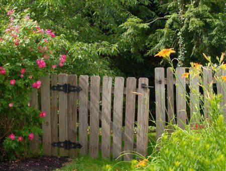rose bush: Old garden gate framed by rose bush and tiger lilies