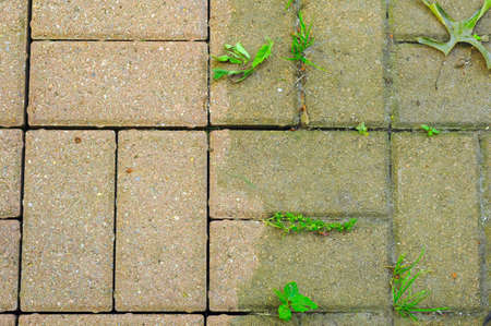 Stark contrast between power-washed and untouched bricks on a patio