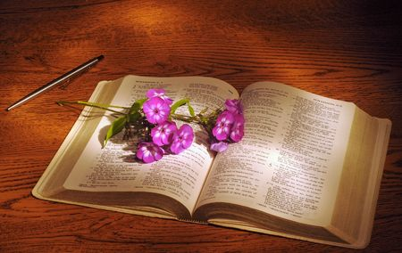 book of revelation: A spray of phlox lying across an open Bible