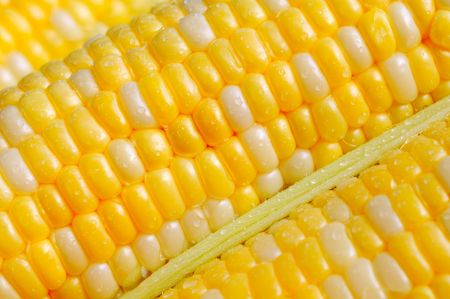 Closeup of freshly picked sweetcorn, bicolored kernels Stock Photo - 5960907