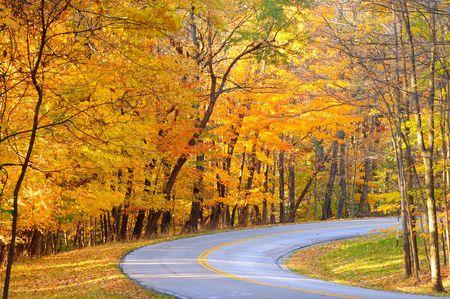 curve: Brilliant autumn colors along the curve of a park road