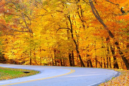 striping: A forest road curves to the left before a brilliant panoply of golden autumn foliage Stock Photo