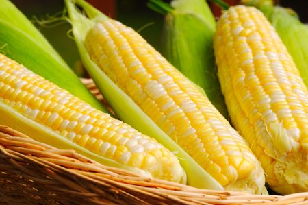espiga de trigo: Cesta de ma�z fresco, algunos en hojas, algunos est�n maduras para cocinar