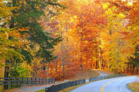 autumn colour: A road and a path diverge in a glowing autumn woods Stock Photo