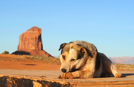 A stray dog at Monument Valley, Arizona, hoping for handouts Stock Photo