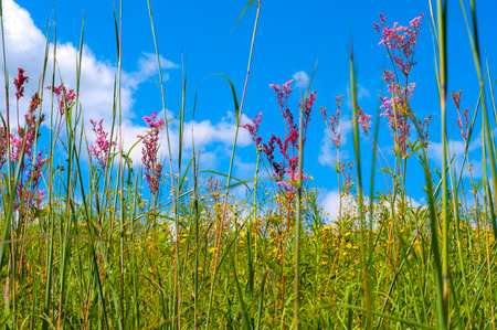 Wildflowers growing in a meadow reach above toward the sky photo